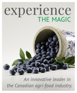 Experience the magic. An innovative leader in the Canadian Agri-food industry. asked of spilled blueberries with greenery.