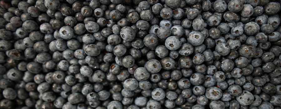 Blueberries, Country Magic, Blueberry Acres