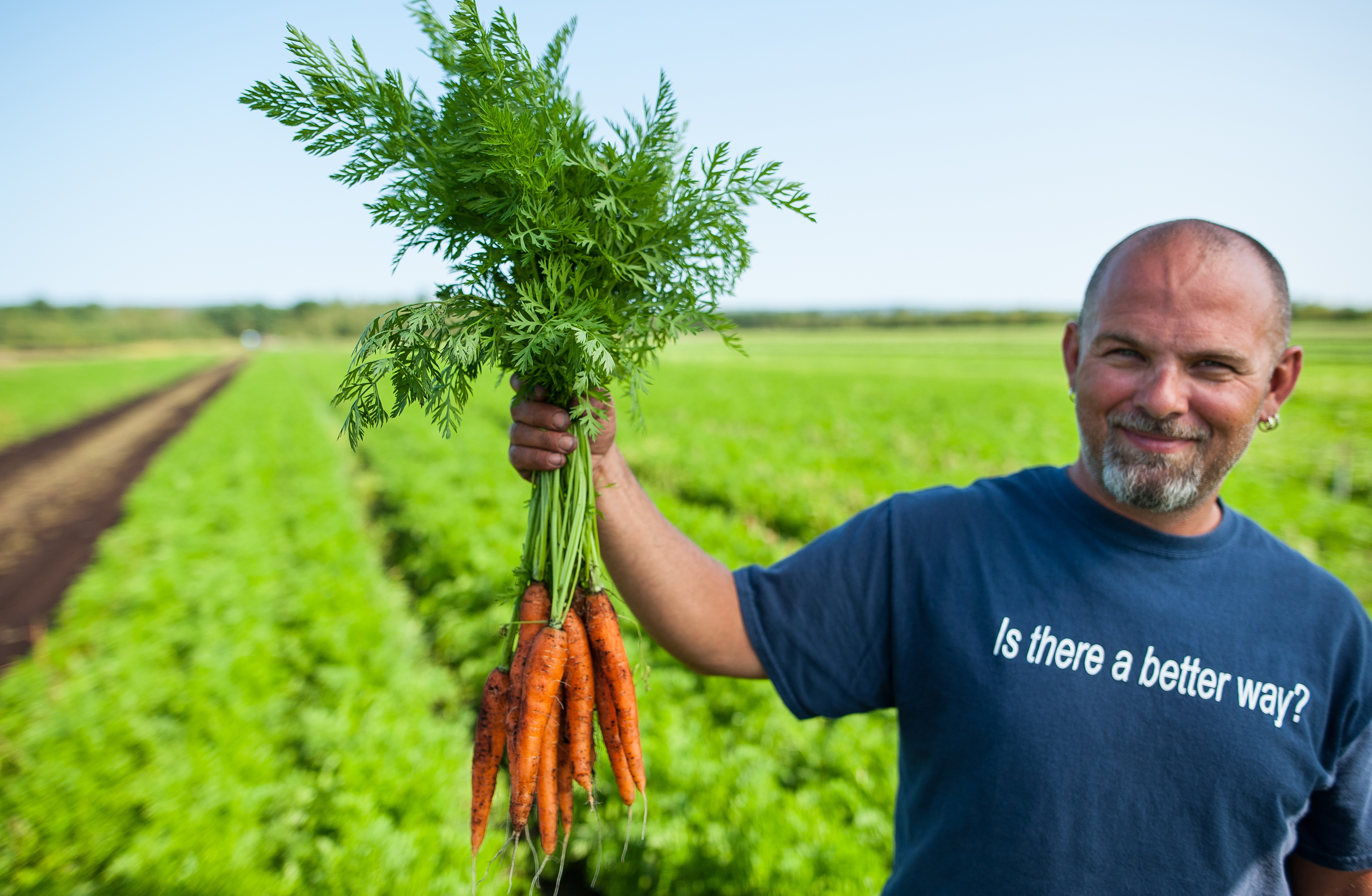 Country Magic Bunched carrots farmers in fields