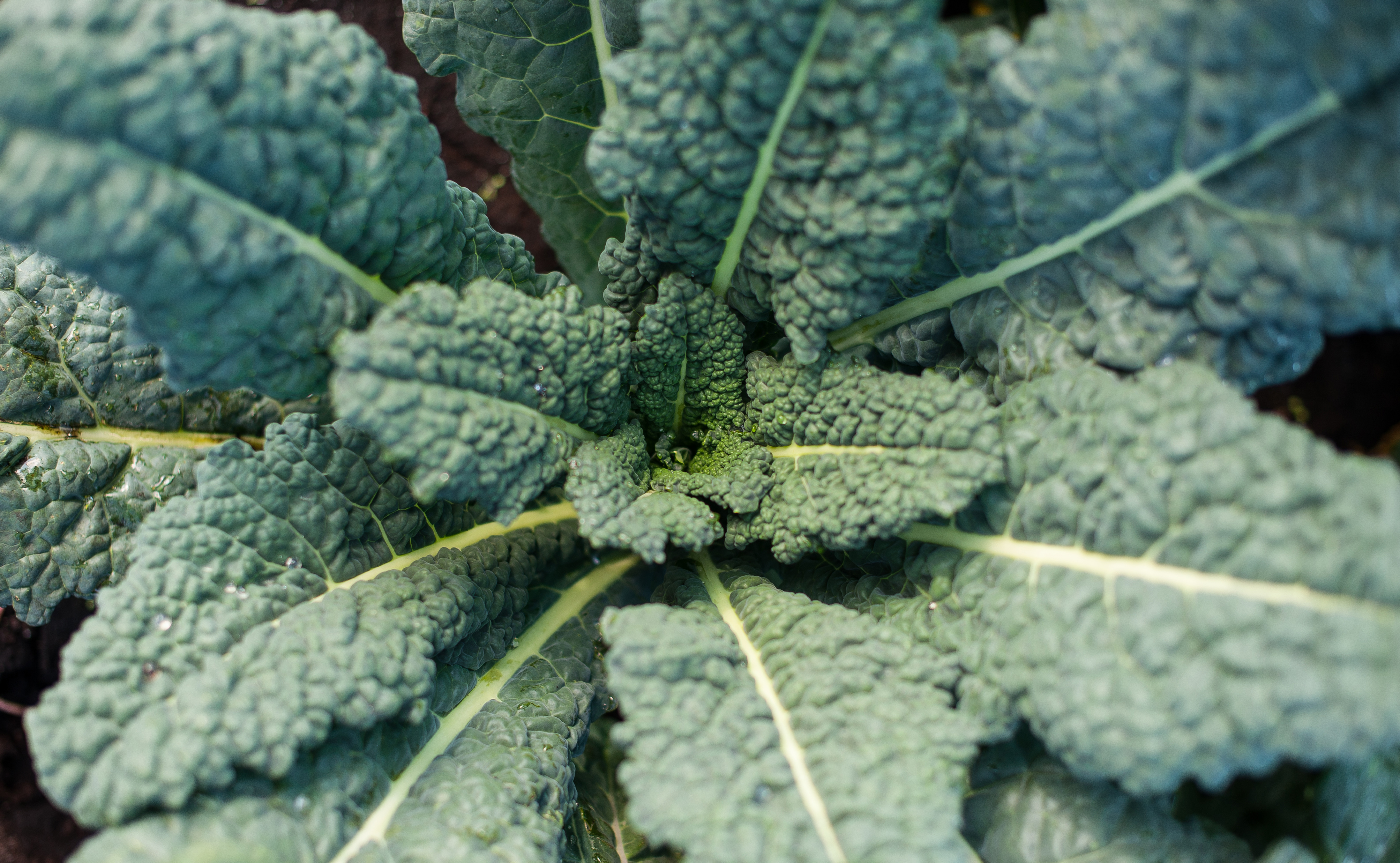 country magic close up black kale