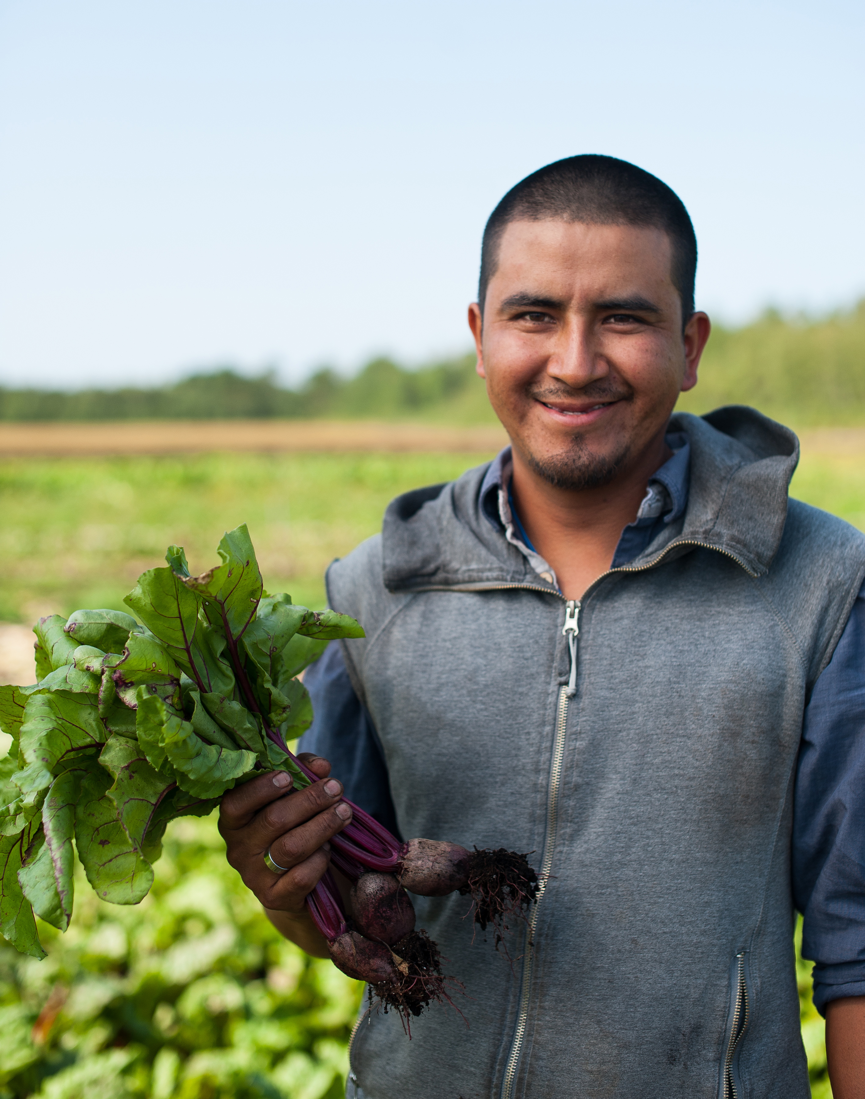 Country Magic Beets hand harvested by employee