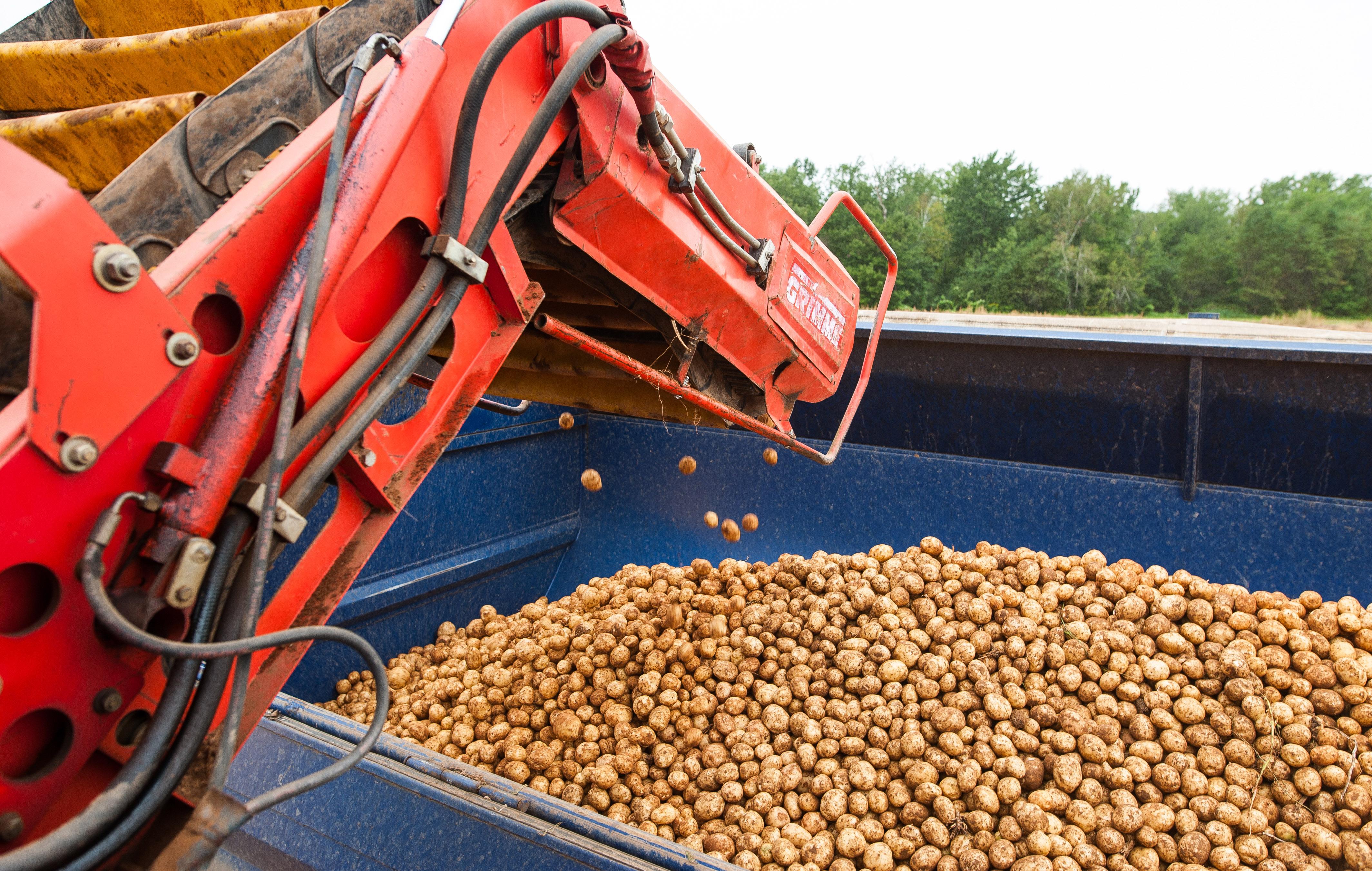 Country Magic Potato Harvest