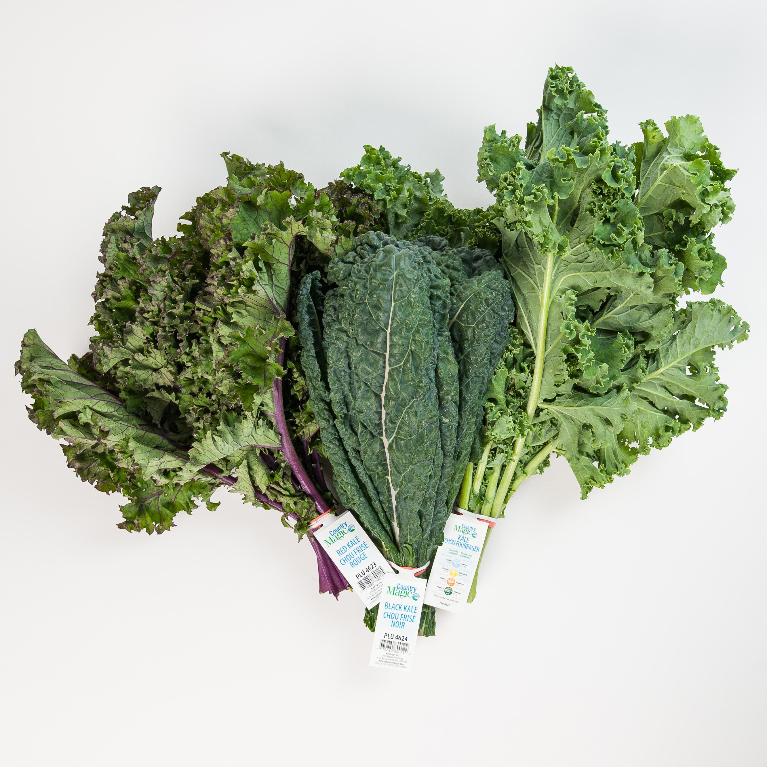 country magic group kale shot, black kale, red kale, green kale
