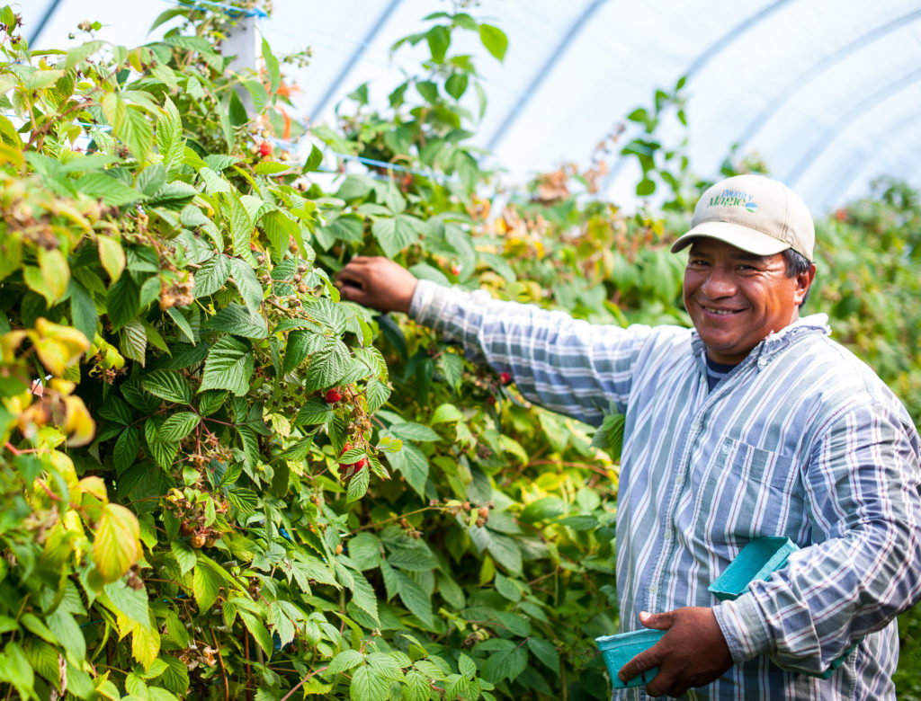 Country magic employee hay grove tunnels raspberries